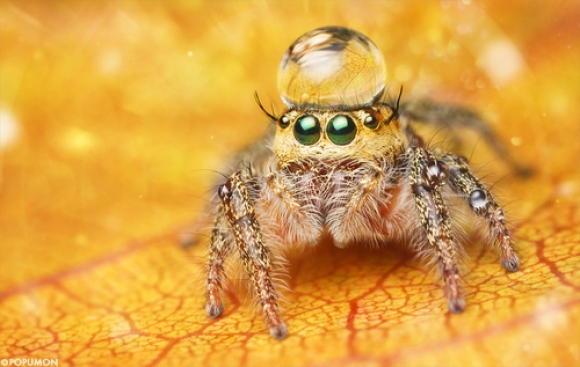 Cute jumping spider - photo#19