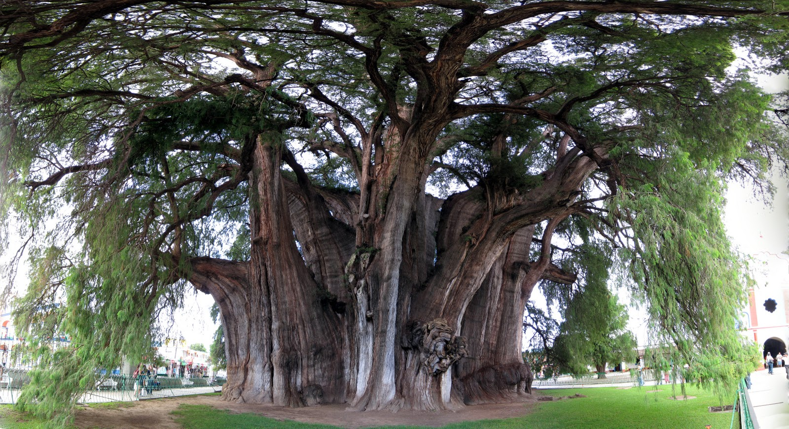 Top 10 Most Amazing Trees In The World