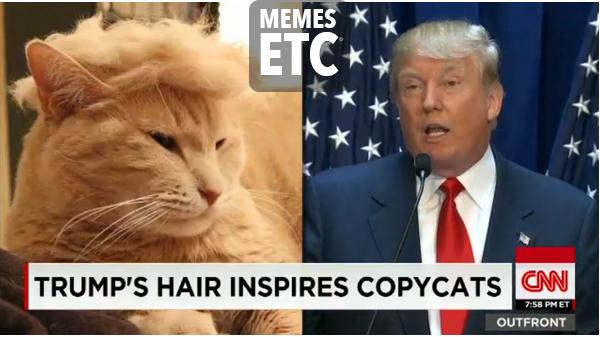 Donald Trump Funny Hair Memes : Top donald trump hair memes terrific top