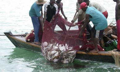 tanzanian fish